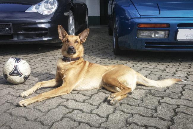 Automobile Genieser, Bad Dürkheim, Vorderpfalz, Spezialisten für Youngtimer und Oldtimer, Mitarbeiter, Team, Werkstatthund